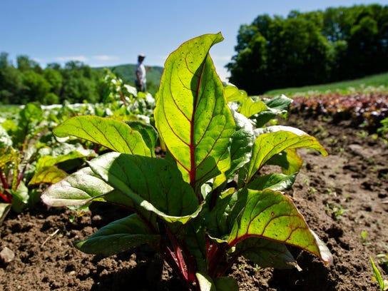 BUR 20140604 GMO DEBATE ANTI C3.jpg