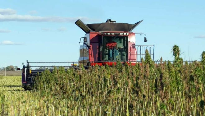 Farmers don't need special modifications to equipment for planting and harvesting industrial hemp.