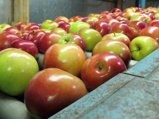 DFP apple crop (2).JPG