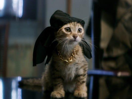 kitties litter the set of key and peele s keanu