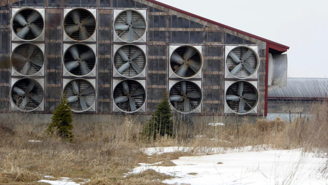 CUTLINE: Among the modern options to ventilate adult cow barns are tunnel facilities that use heavy-duty exhaust fans to pull out moisture, heat, noxious odors and flies.