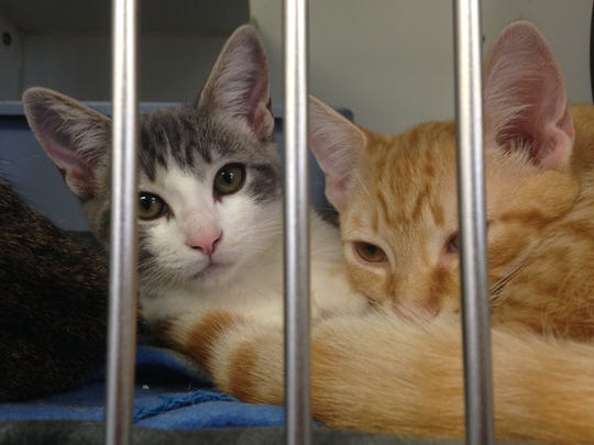 Kittens sit in a cage at the SPCA in Brands Flats.