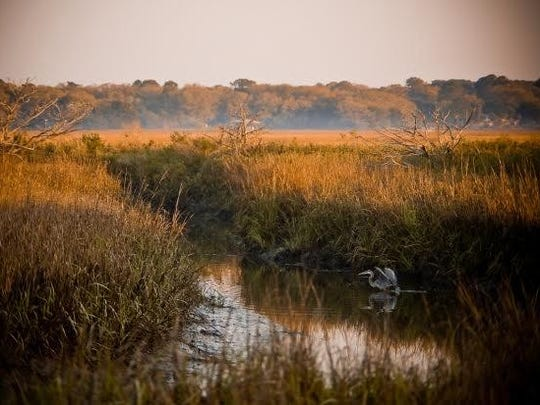 The expansive salt marsh grasses are especially dramatic