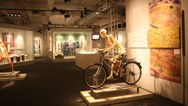 The Bodies Revealed exhibit opened Jan. 29 at the Discovery Park of America in Union City.