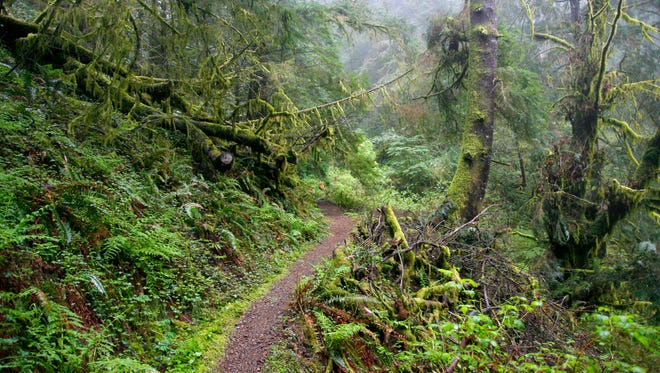 A trail leading up Humbug Mountain travels through lush old-growth forest.