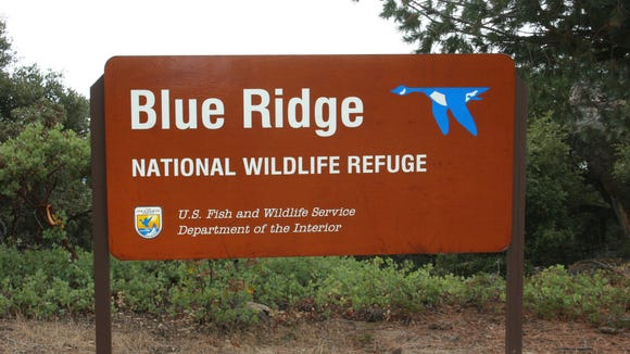 Blue Ridge in Tulare County is now home to some California Condors.