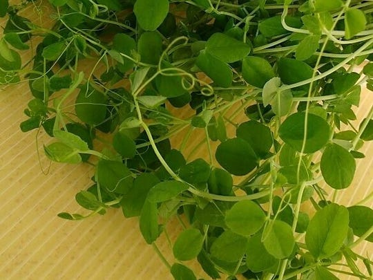 Glory Fresh microgreen shoots are excellent in salads and smoothies.