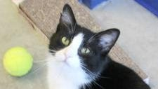 Lisa is the Licking County Humane Society's furry friend of the week.