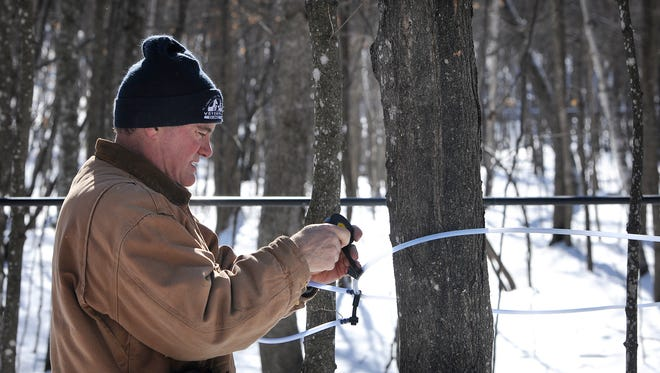 Tom Carlson checks a portion of the collection system for maple syrup Feb. 21 at Kraemer Lake-Wildwood County Park.