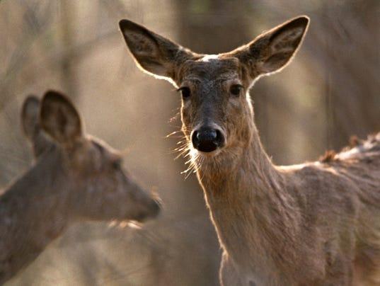 635878771081942395-deer.jpg