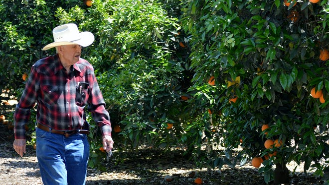Bob McKellar, owner of McKellar Family Farms talks about the citrus bloom spray restrictions set for the next three to four weeks. The restrictions keep farmers and pest control operators from spraying pesticides harmful to bees.