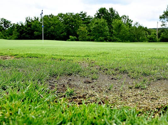 Deterioration on the green at the eleventh hole is shown The Bridges Golf Club in Abbottstown, Pa. on Wednesday, June 17, 2015. The degradation is due to a fungicide that had trace amounts of herbicide in certain batches. General Manager Doug Alatland says that the affected greens will be re-seeded in the near future.