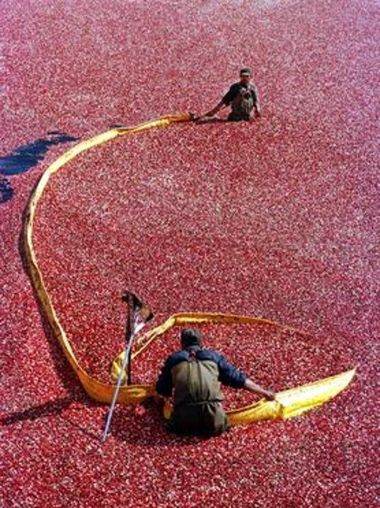 636361565030519658-cranberry-cropduster.jpg