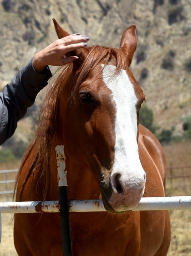 Stacy Hyatt, who lost her home when the Thomas Fire swept through the property she was renting in December, shares a moment with Brody, one of her four horses.