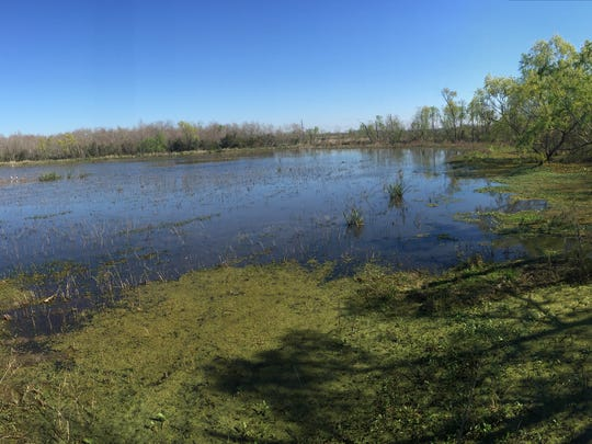 Overlooking the marsh at Creole Nature Trail Adventure
