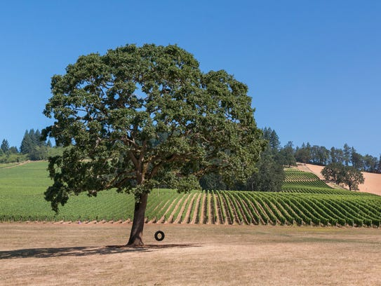 The Willamette Valley, unlike comparably famous American