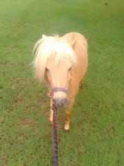 A pony named Little Big Man went missing from a family's property in San Ysidro on Oct. 22, 2017. The owners believe someone stole the horse, and they're seeking its return.
