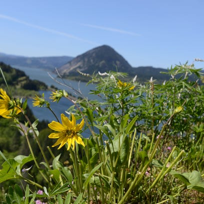 Some trails open after Columbia Gorge Eagle Creek wildfire
