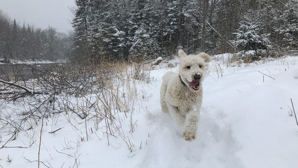 More snow, and more happy running for Henry, this time