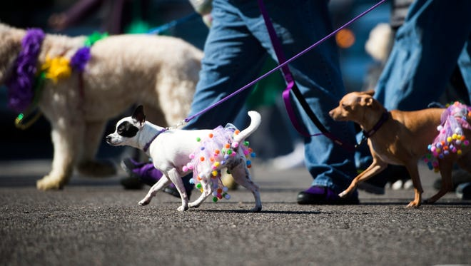 Dogs and their owners walk down Gay Street as part of Young-Williams Animal Center's 10th annual Mardi Growl parade on Saturday, March 4, 2017.