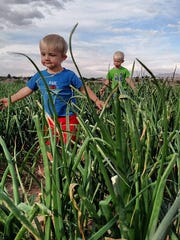 For the Franzoys, farming is a true labor of love and looking at their two young sons, it would appear the next generation will continue the tradition.