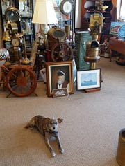 Toby greets visitors at Blue Moon Antiques Collectibles & Furniture in Cape Coral.