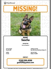 Sascha is missing from 10th Street and Golden Gate Boulevard area.