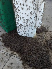 A swarm of mayflies descended on the BP gas station