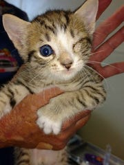Two dozen cats, some of them newborn kittens, have