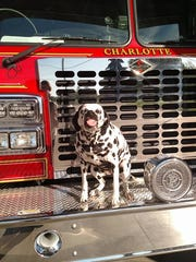 "Calie Fullerton, the Charlotte Fire Department's ""fire dog"" for the last eight years, smiling in front of a fire truck. She died Monday, Feb. 19, after a sudden cancer diagnosis."