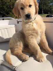 The Sanchez family's newest addition, golden retriever