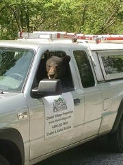 A bear sits in the driver's seat of a truck owned by
