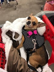 Coco, a five-pound chihuahua, died while her owner left her at Bruno's Bath House, a Facebook post by the business states.