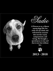 Travis Binkley and Lori Pardue have a granite headstone engraved with this image of Sadie, their dog who was shot and killed by a Cheatham County Sheriff's Officer at their home on June 13. In Sadie's honor, they said, they worked with the Cheatham County Sheriff's Office to equip all deputies with ultrasonic devices to repel animals they think may be aggressive.