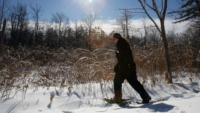Lisa Masi,  a wildlife biologist with the New York State Department of Environmental Conservation, uses snowshoes along a wooded area near Fahnestock State Park in Kent.
