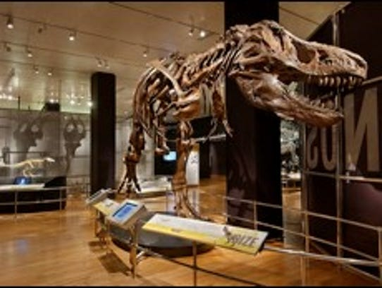 A full-size cast of a Tyrannosaurus rex fossil skeleton