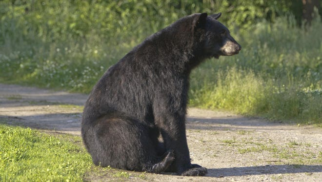 The Michigan DNR wants deer hunters to watch out for bear dens.