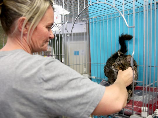 Teri Smith, the manager of Salem Friends of Felines,