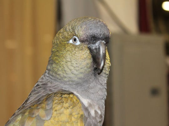 The Family Pet Show will feature a Parrot Show with John Lege
