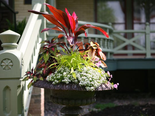 Cast iron urns on pedestals filled with annuals welcome