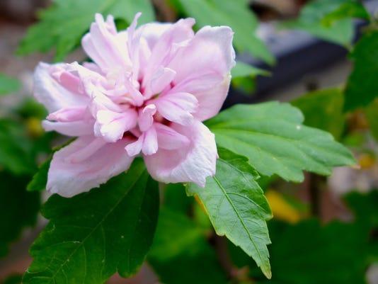 636094543577292528-7-davidcalle-bonsaisociety.jpg