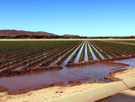 irrigated-field.jpg
