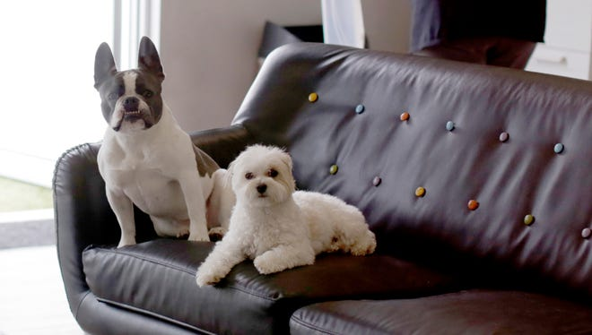Two canine clients relax in the lounge at The Pet Station Country Club