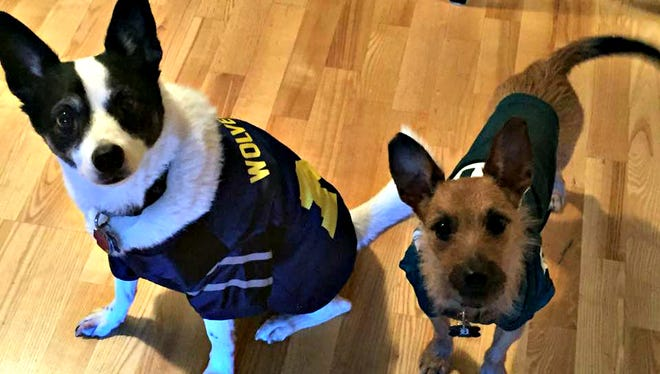 Dress your pets for the Michigan-MSU game!