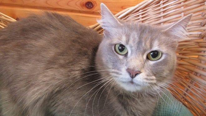 Sycamore is the Pet of the Week.