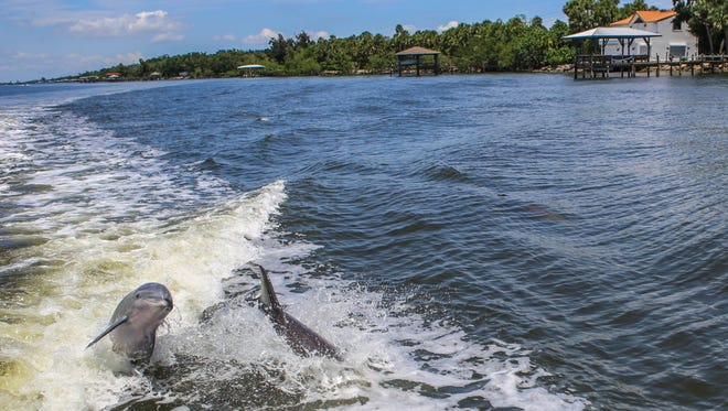 Forum on Thursday will focus on finding ways to help repair the Indian River Lagoon.