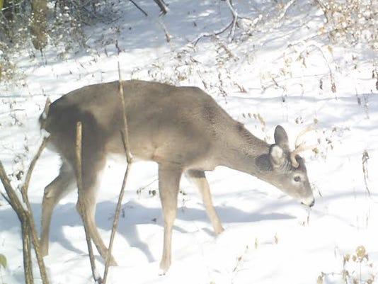 -deer.jpg_20140212.jpg