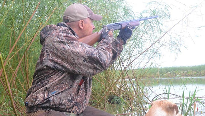 Mississippi could see another good duck season as surveys indicate the numbers have increased for most species.