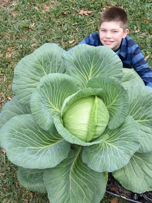 636511932236565927-Bonnie-Big-Cabbage.jpg