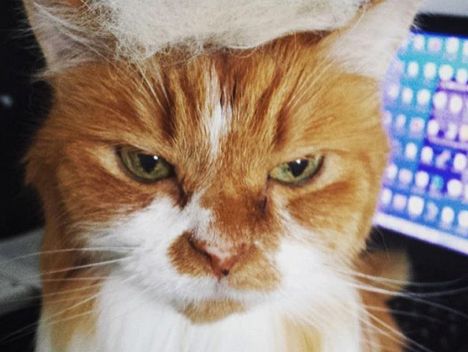 Trump Your Cat how-to: 1. Brush your cat. 2. Collect